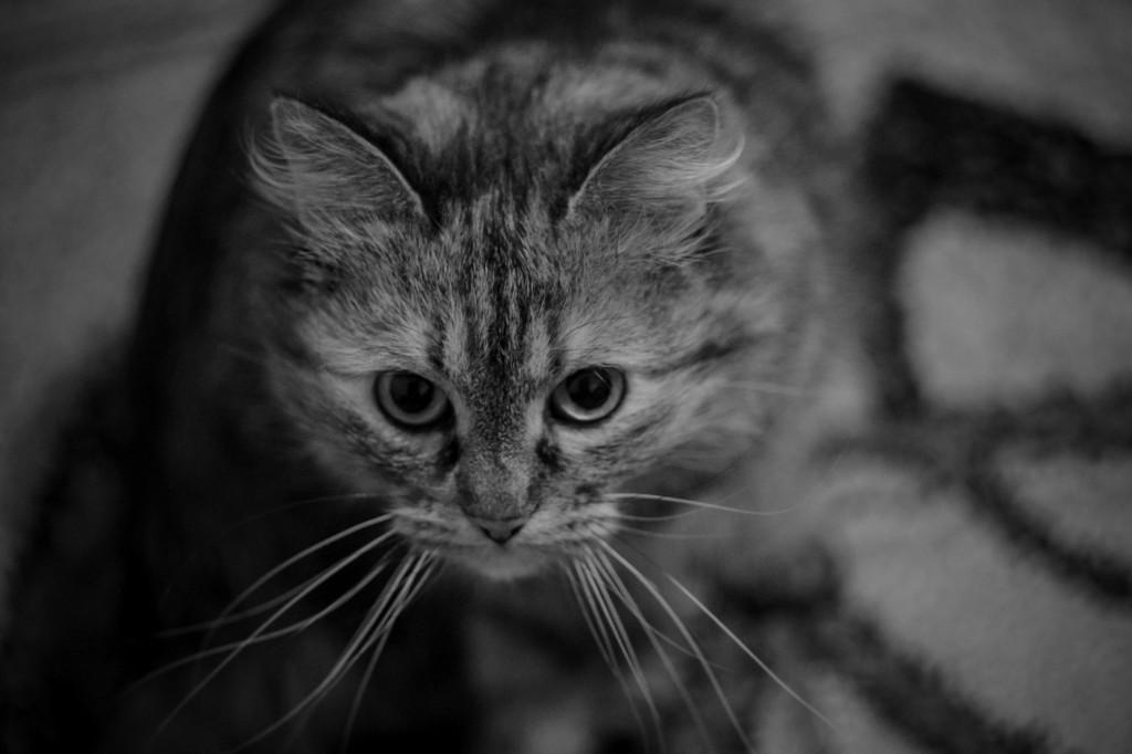сделать черно-белым фотошоп