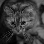 Урок 5 Как сделать черно-белое фото в фотошопе