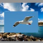 Как перенести объект на другой фон в фотошопе