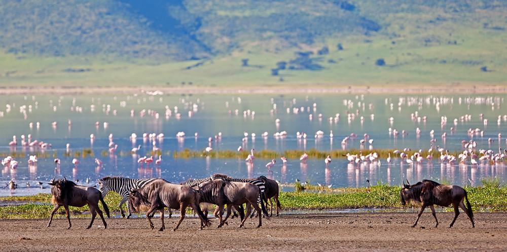 Картинки по запросу Нгоронгоро - Танзания