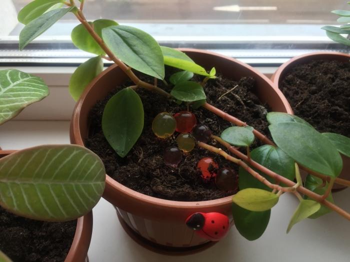 Гидрогелевые шарики в горшке с комнатным растением.