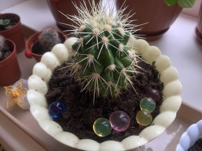 Гидрогелевые шарики в горшочке с кактусом.